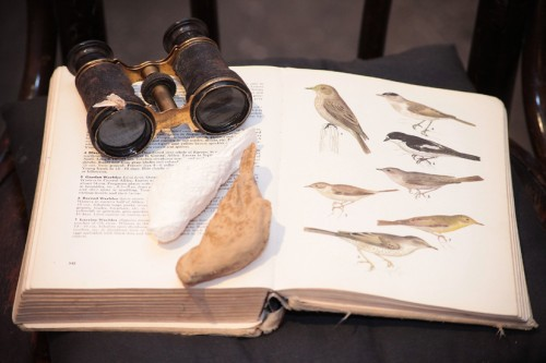 Ausstellungsmotiv: antiquarisches, ornitologisches Lexikon, Vogelobjekte, Fernglas